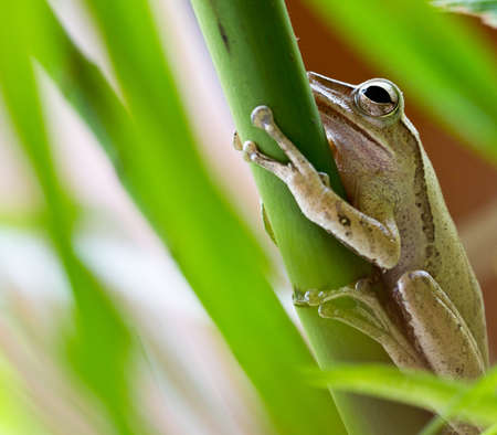 Tree frog resting on a tree plant photo