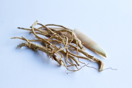 one type of chinese herbs photo