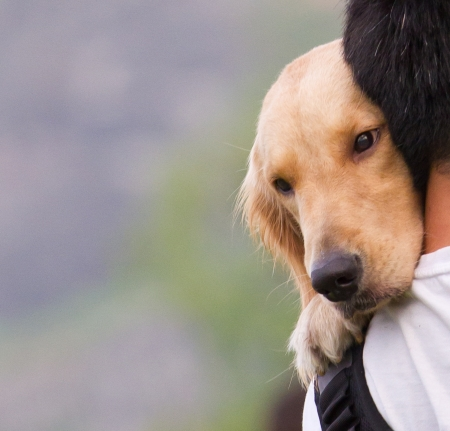'head and shoulders': Dog on a man shoulder