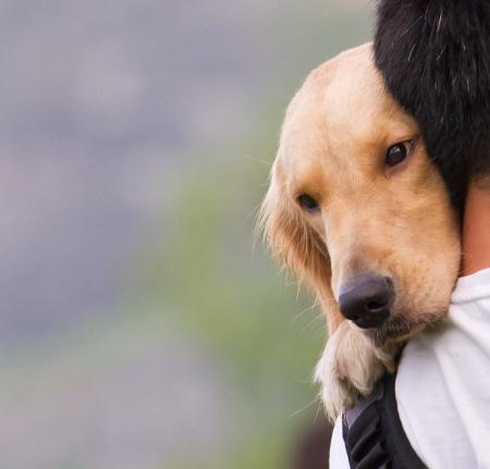 hombros: Perro en un hombre hombro Foto de archivo