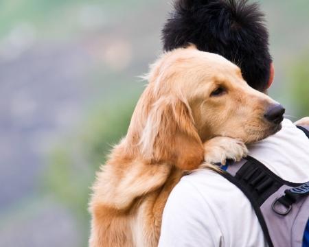 Dog on a man shoulder