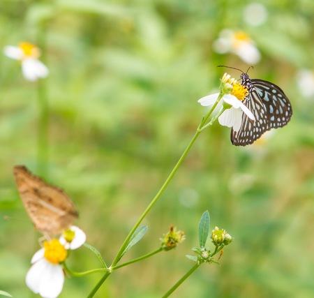 Butterfly farm in Zoo Negara photo