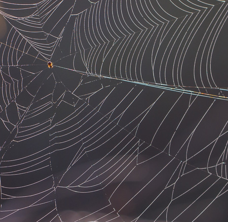 Spider web act as background