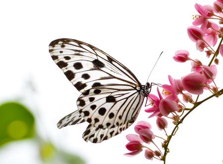 Mooie vlinder in een vlinder park Stockfoto
