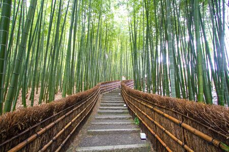 japanese people: Kyoto, Japan - green bamboo grove in Arashiyama Stock Photo