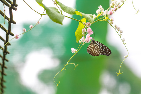 background green: Beautiful butterfly
