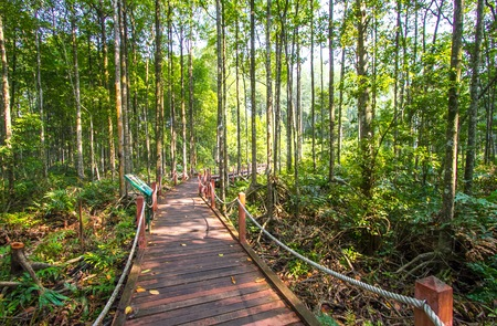 Mangrove forest in Kuala Sepetang Malaysia Stock Photo