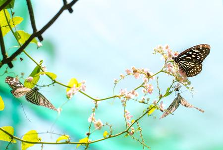 papillon: Papillons color�s dans un parc de papillon