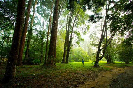 stroll: A stroll in the forest with tall trees