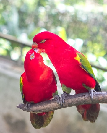 intimate: Two parrots having a great intimate time