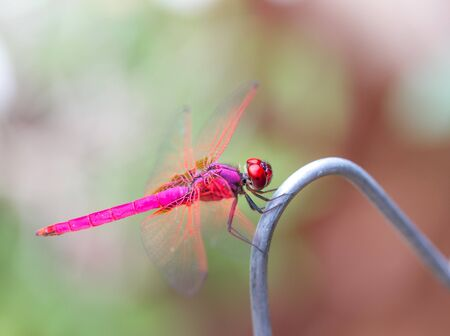 smal: Beautiful dragonfly taking a break Stock Photo