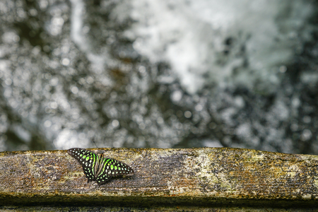 Butterfly by waterfall with copy space Stock Photo