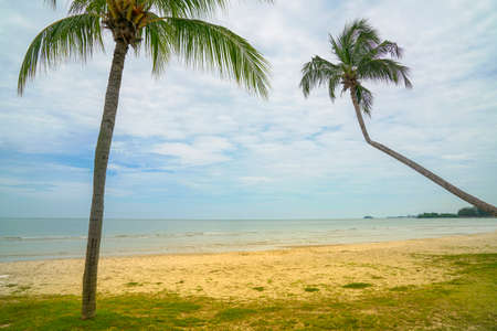 Tropical sandy beach with coconut trees. Travel concept.