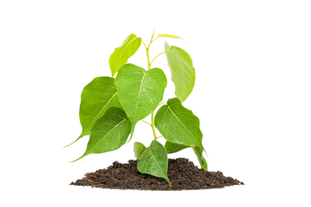 plant tree white background Stock Photo