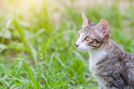 background: tabby cat in the grass Cat in the grass watching. Stock Photo