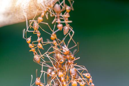 Ant ブリッジユニティチーム