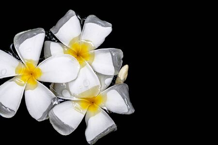 Flowers of plumeria in the water surface. Water fluctuations copy-space. Spa concept background