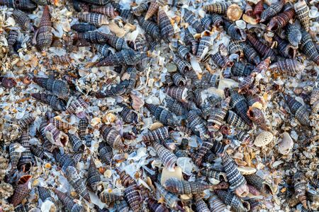 background of old shells, sea shells for use as building material