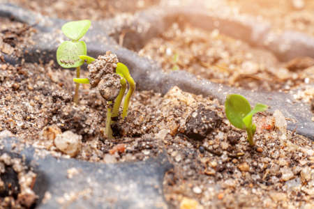 seed root on soil with sunbeam new life start concept Stock fotó