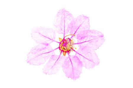 Beautiful flower isolated on white background Stock fotó - 165281153