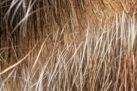 Straw Closeup