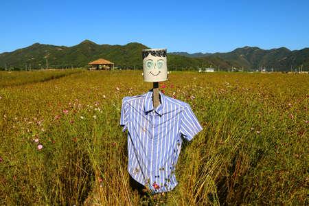 espantapajaros: scarecrow