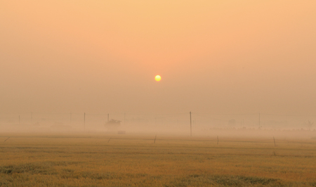 sunrise on the fall field with fog Stock Photo