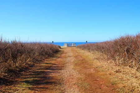 unpaved road: Unpaved road to horizon