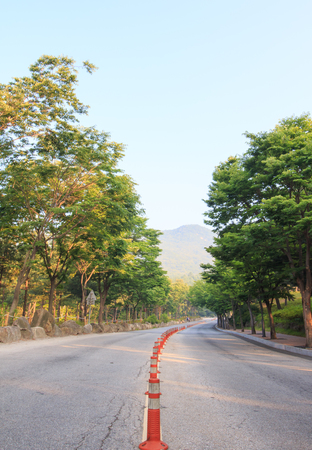 median: empty small asphalt road with gree trees in the morning. Stock Photo