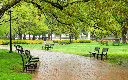 Empty benches in the green park on a rainy day