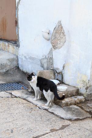 shantytown: alley cat in shantytown in Seoul, Korea