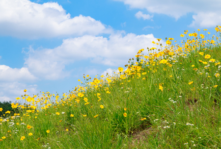 flowery hill under blue sky with cloud Banque d'images - 114430091