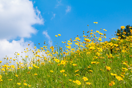 flowery hill under blue sky with cloud Banque d'images - 114430191