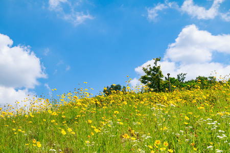 flowery hill under blue sky with cloud Banque d'images - 114430197