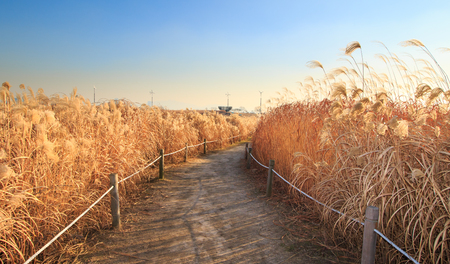 Winter landscape of Haneul Park, another name is Skypark, in Seoul, Korea.