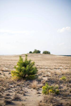 small bush in the desert photo