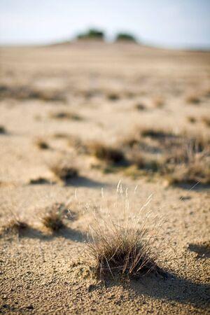 details in the desert photo