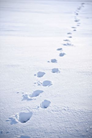 footsteps in the snow photo