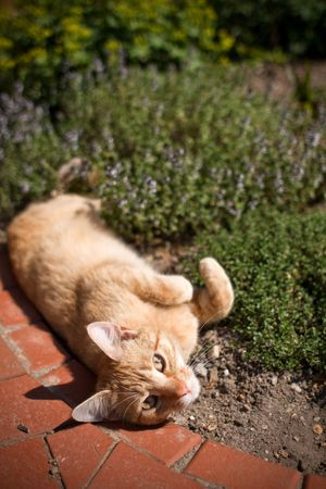 snoozing: cat laying in garden Stock Photo