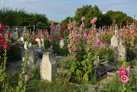 hollyhocks: Cemetery of Talmont with its hollyhocks