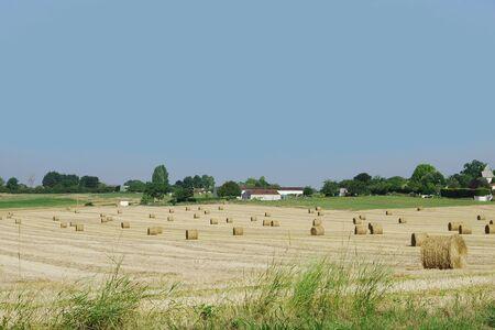 After the harvest, straw harvest
