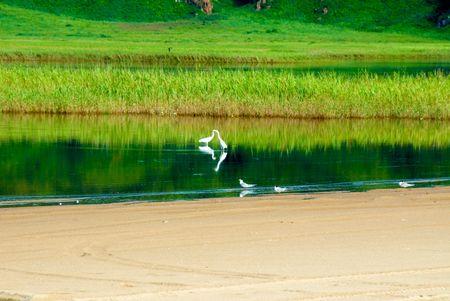 bogs: Hasansky bogs. White Cranes.
