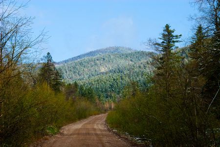 priming: Forest road Stock Photo