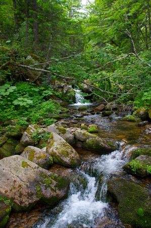 ussuri: River Padyushka.
