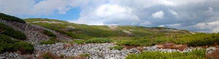 elfin: Spurs of rock slides Mount Snow. Elfin cedar. Panorama.