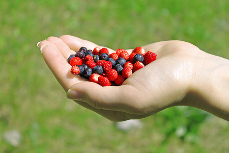 berry: Female hand holding a handful of wild berries - strawberry and blueberry. Green grass background.