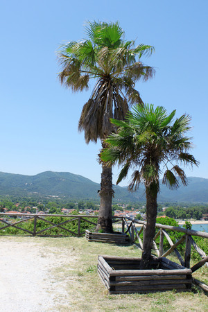 summer trees: Two palm trees close to the wooden fence near the sea. Mountains, sea and blue sky on the background. Photo taken in Olympiada, Greece.