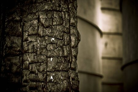 An abstract of a burned tree Stock Photo