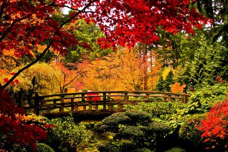 A bridge in a japanese garden