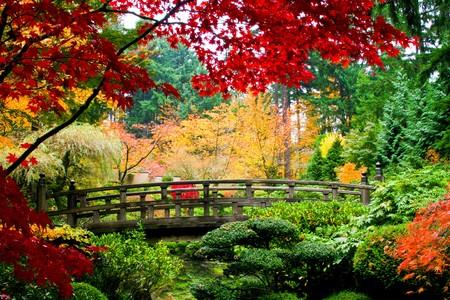 A bridge in a japansese garden during Fall season